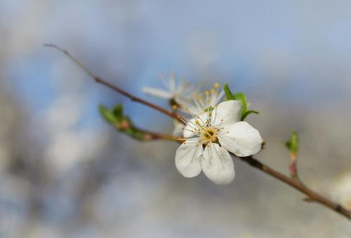 Wiosennie ...