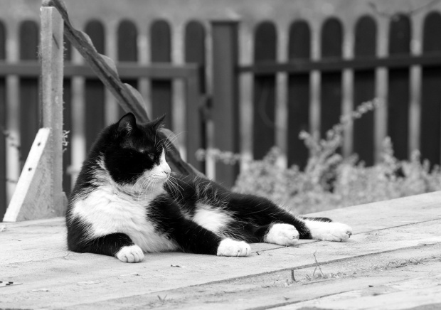 przypadkowy kotek
