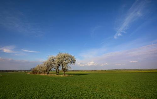 Wiosenne wspomnienia ....