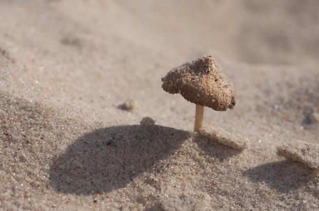 Na plażę...na grzyby :))