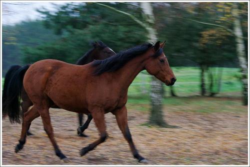 Konie.