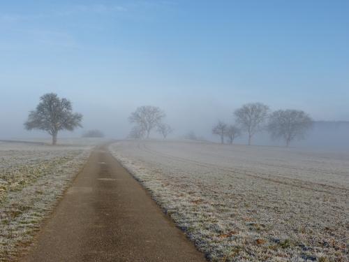 droga pośród pól