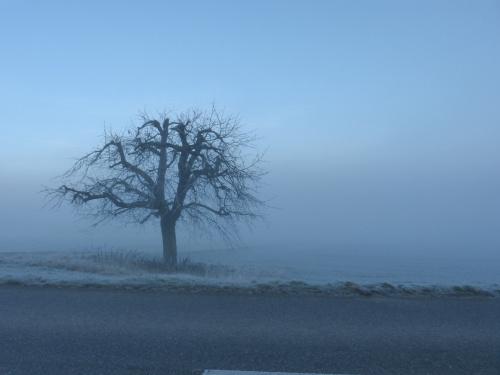 a wkoło mgła