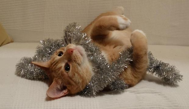 Aron w świątecznej odsłonie z boa...