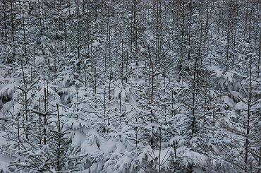 Zima na Ślęży